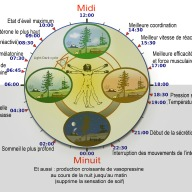Biological_clock_humanNycthéméralFrenchVersion